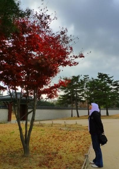 Pohon di halaman istana. Merahnya okee