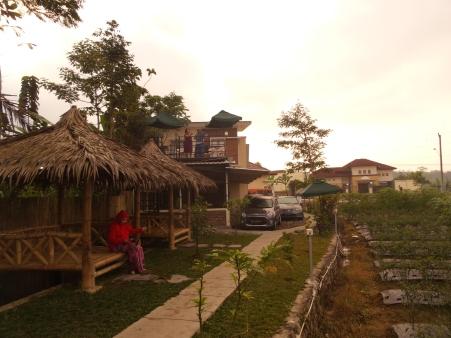 pemandangan dari teras homestay