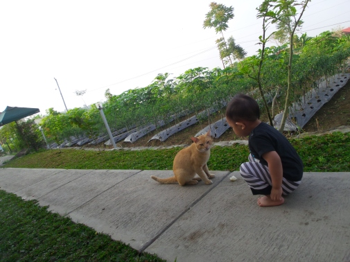 kasi cireng ke kucing